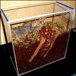 Террариум для паука птицееда размерами 150х300х300